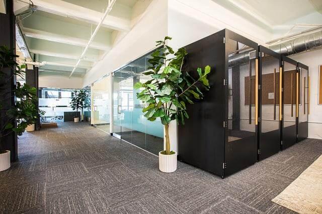 Wiszące rośliny w biurze